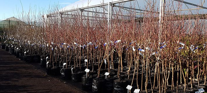 Fruit-trees-arriving
